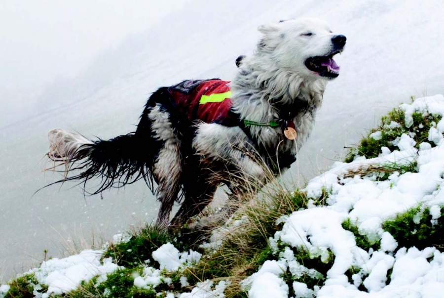Search dog 'Nell' doing what she loved best… Sleep tight x